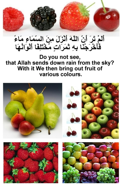 Fruits Colors